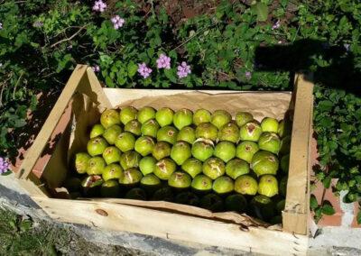 il-ciliegio-fattoria-didattica–8