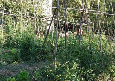 il-ciliegio-fattoria-didattica-genova-13