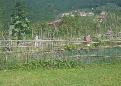 il-ciliegio-fattoria-didattica-genova-20