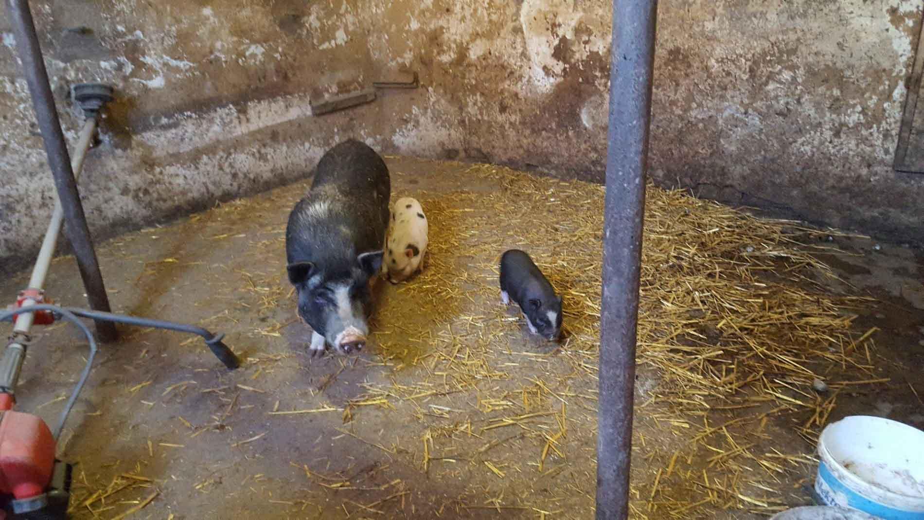il-ciliegio-fattoria-didattica-genova-31