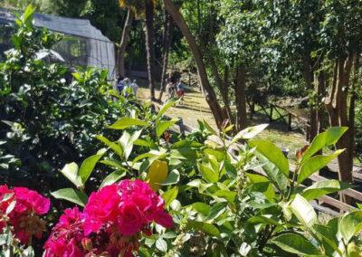 il-ciliegio-fattoria-didattica-genova-4