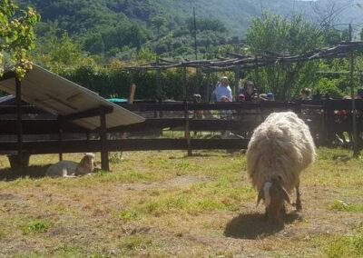il-ciliegio-fattoria-didattica-genova-46