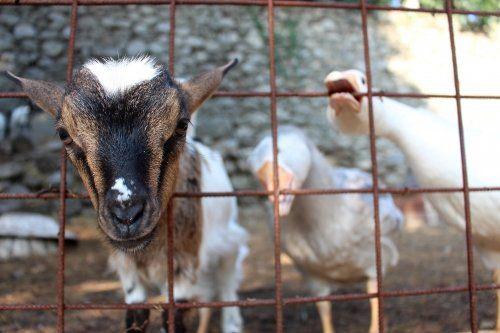 il-ciliegio-fattoria-didattica-genova-63