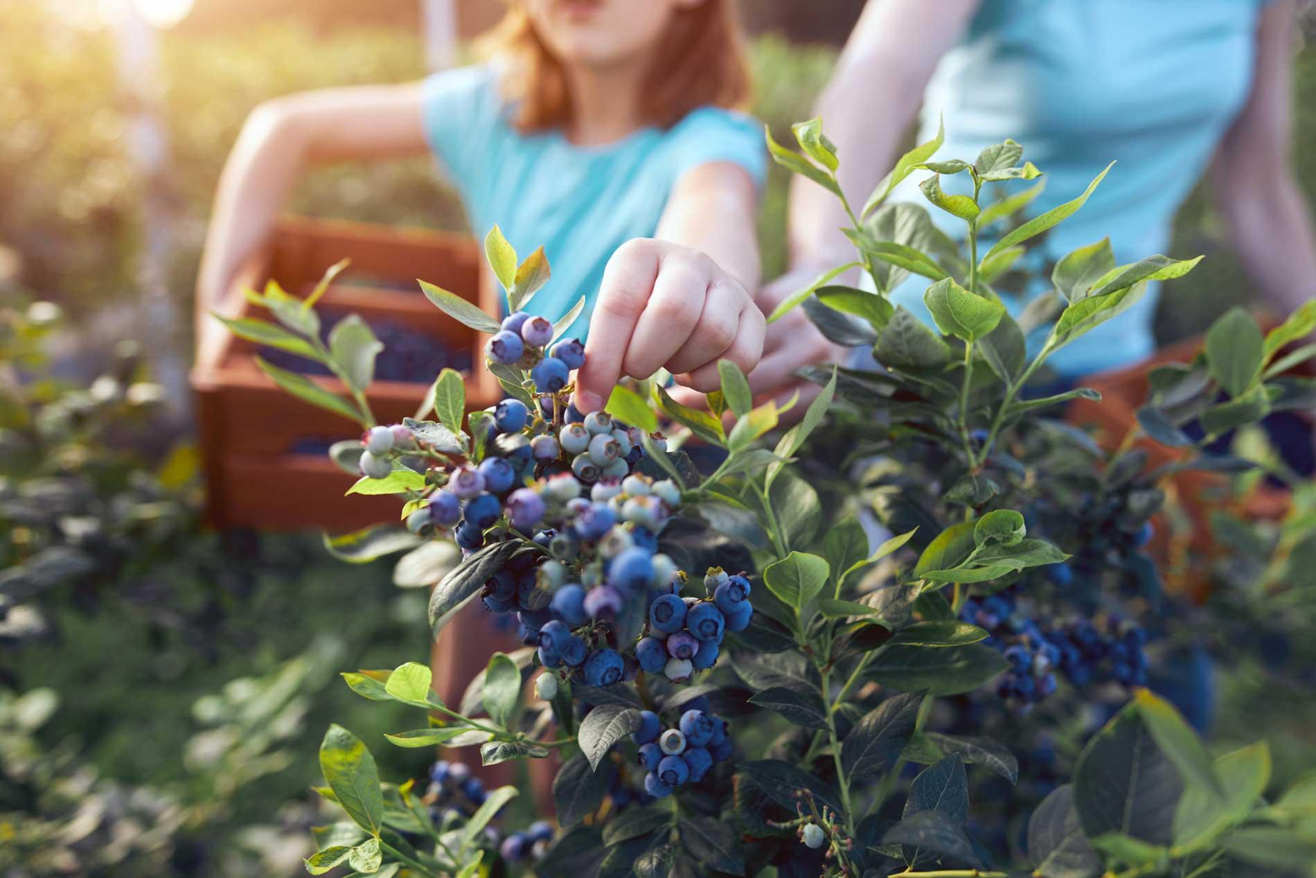 il-ciliegio-fattoria-didattica-genova–9