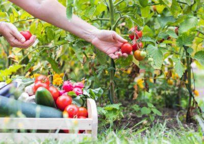 il-ciliegio-fattoria-didattica-genova-agriturismo-9