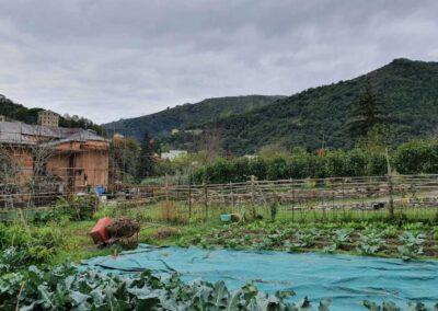 il-ciliegio-fattoria-didattica-san-desiderio-10